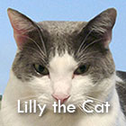 lillythecat-icon